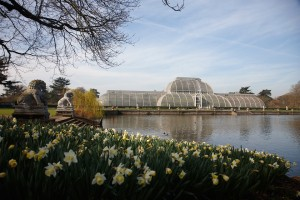 The Royal Botanic Gardens, Kew, usually referred to as Kew Gardens. A national landmark and visitor attraction in West London. The Palm House, a glasshouse built in the 19th century, designed by Decimus Burton. Lake. Daffodils flowering.